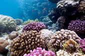 colorful coral reef with hard corals on the bottom of tropical sea