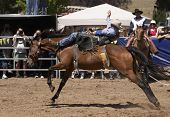 picture of teen pony tail  - rider on a bucking horse - JPG