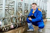 foto of animal husbandry  - Veterinarian doctor worker at agriculture reproduction farm or pork plant inspecting pig - JPG