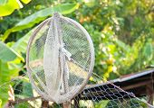 Catching Fisher Net  Tool