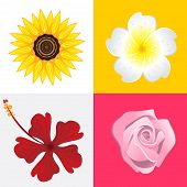 foto of musky  - Blossom Of Rose, Jasmine, Sunflower And Hibiscus Flower.  Useful As Icon, Illustration And Background For Floral Theme. - JPG