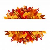 pic of rowan berry  - Vector background with autumn leaves and berries - JPG