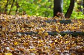 Closeup of autumn trail