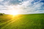 sun near the horizon and green field