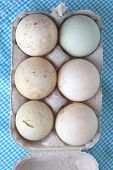 stock photo of duck egg blue  - Duck fresh eggs in a carton pack on blue background - JPG