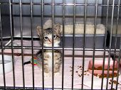 Tiny Kitten In Cage