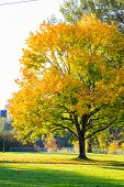Beautiful Fall Tree Leaves