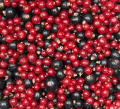 mix of redcurrant and  blackcurrant