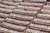 image of squid  - Squid lay on net Dried Squid traditional squids drying in the sun in a idyllic fishermen villageThailand - JPG