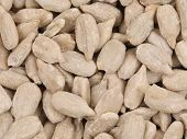 stock photo of sunflower-seeds  - Background of sunflower seeds - JPG