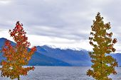 picture of lagos  - Autumn scenery of colorful trees with Alps mountains on background at Lago Maggiore Italy - JPG