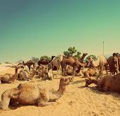 Pushkar Camel Fair in India - vintage retro style