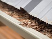 Cleaning Gutters In Spring