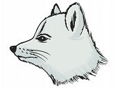 picture of arctic fox  - hand drawn sketch illustration of polar fox - JPG