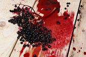 foto of elderberry  - Spilled juice elderberry fruit on the table - JPG