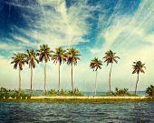 Vintage retro hipster style travel image of palms at Kerala backwaters with grunge texture overlaid.
