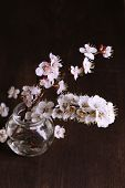 Beautiful apricot blossom in transparent jar on wooden background