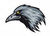 Raven Mascot