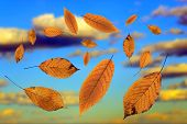 Falling Leaves Over The Sky