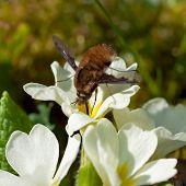 Beetle Pollinate Flower Blossom