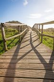 Wood boardwalk in sunny day on fields background
