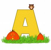 Alphabet Pumpkin Patch A