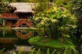 Lodge in the middle of the amazonian jungle National Park Yasuni