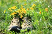 hiking boots with yellow wild flowers in grass
