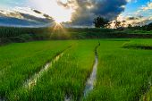 The Last Light With Green Rice Field