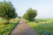Country Road Early On A Misty Morning