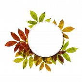 Autumnal Background With Colorful Leafs