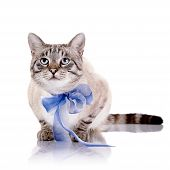 Striped Cat With A Blue Tape.