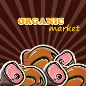 vector illustration of poultry and meat. organic food concept