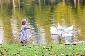 Cute Baby Girl Chasing Wild Geese In An Autumn Park