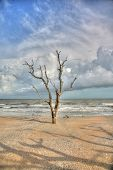 Oak tree in sand with stormy sky