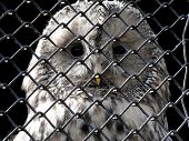 owl under grating