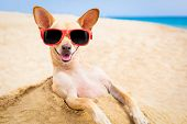 Cool Dog At The Beach