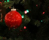 Red Bauble on a Christmas Tree
