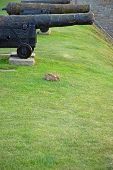 Old Cannons With Rabbit In Kalmar Castle, Sweden
