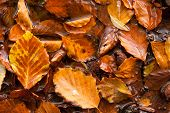 wet autumn leaves background texture