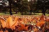 autumn leaves sunlight field