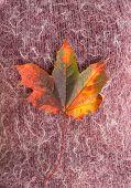 autumn leaf on wool background