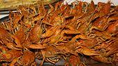 Boiled Red Crawfish