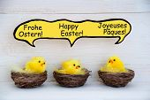 Three Chicks With Comic Speech Balloon With German French And English Happy Easter