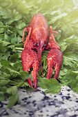 Red River Crayfish On Green Parsley