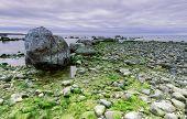 Coastline, stones