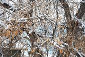 Winter snow.