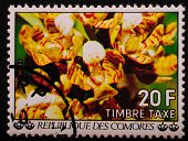 Comoros - Circa 1977 : Postage Stamp Printed Comoros Shows An Image Of Exotic Flowers Yellow On The