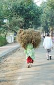 Women Carrying Hay For A Living December 25,2009 In Sanchi,india.sanchi