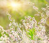 Summer flower meadow soft photo